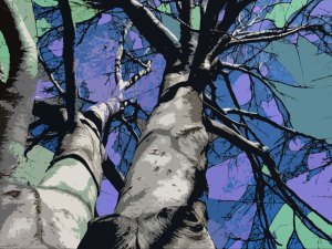 beeches-cutout