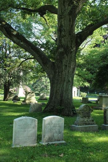 stones-and-tree
