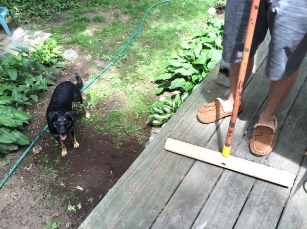 slippers-dog-broom-deemallon