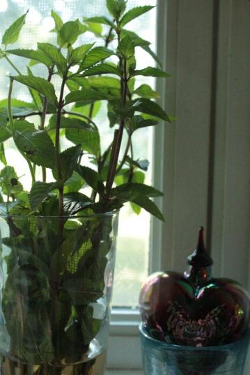windowsill-mint-deemallon