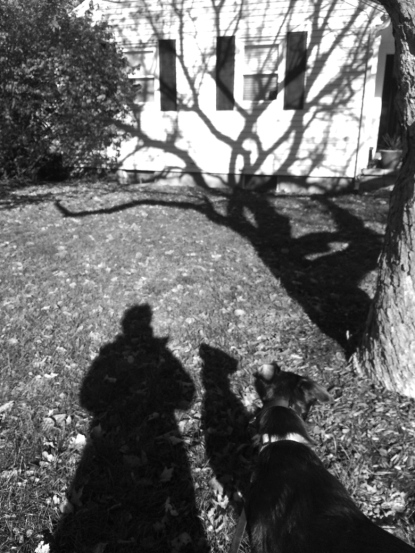 shadow-dog-treebranch-deemallon